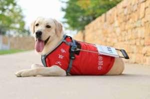 导盲犬的训练方法有哪些